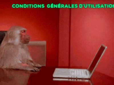 Un singe assis devant un ordinateur