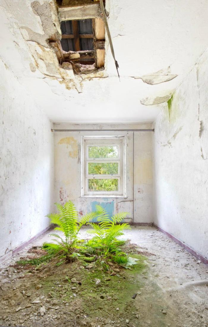 Une pièce vide et délabrée où des plantes traversent le plancher tandis que le plafond s'écroule